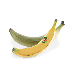 Fruits_Thumbnails_plantains_1